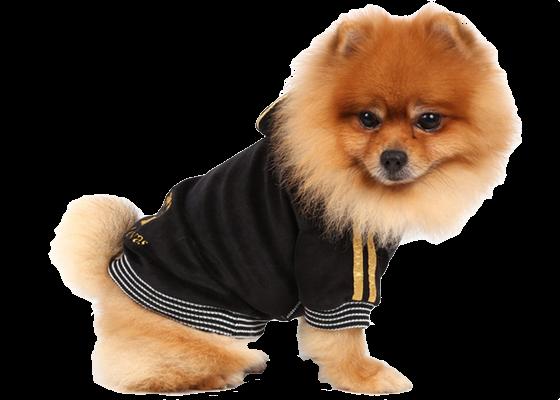 doggydolly_amazon_3_1