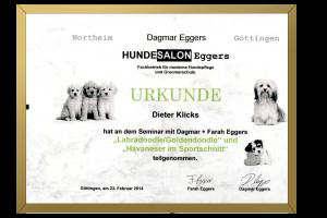 Zertifikat Labraddodle und Goldendoodle im Sportschnitt