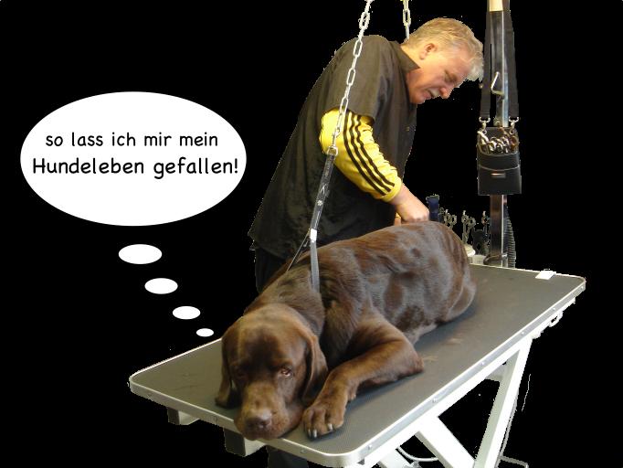 so_lass_ich_mir_hundeleben